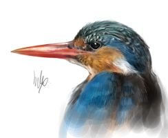 King Fisher by Silverfox5213