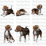 Beagle Puppies Stock Pack 2 by Shoofly-Stock