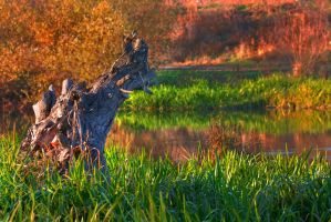 Autumn Swamp by mariustipa