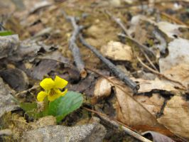 Mountain Wildflower by sha-shajewelry
