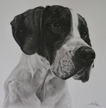 Commission - Pointer 'Milo' by Captured-In-Pencil
