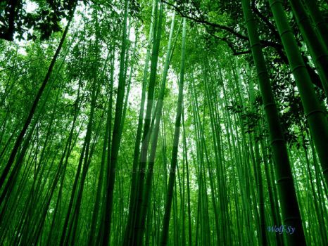 Bamboo.. Lots of bamboo by Wolf-Sy