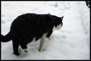 cat in snow II by 666Bruno