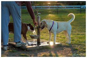 Water Fountain Pooches by jaydoncabe