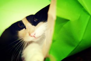 .a cat in a bag by sprinkling-of-color