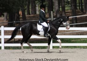 Dressage 008 by Notorious-Stock