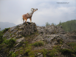 .:Mountain Ram pony:. by poseidonsspear