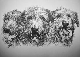 Deerhounds by Concini