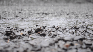 Water Puddle *Cinemagraph* by Akita-Chuken