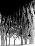 2x Exposure Trees and Spines by Darthlizard