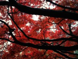 red maple by q3ani