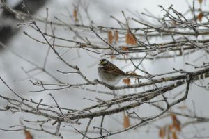 Sweet Little Sparrow by AMStrongPhotography