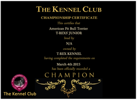 T-Rexs' Junior Champion Certification by T-Rex-Kennel