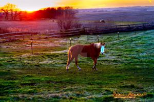 Country Sunset Horse by DanaHaynes