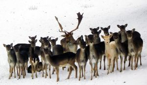 the last supper, deer version by TheBlueBus