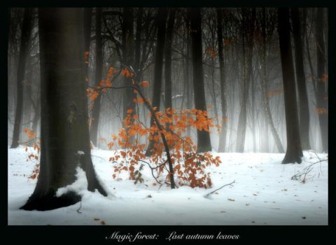 Magic forest: Last leaves by manroms