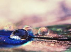 drops by Megson