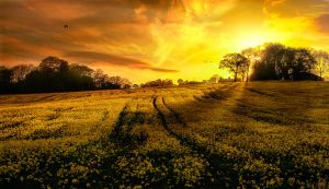 Spring Field Pano 2 by kyleparr