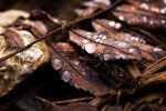 Drops And Leaves by ZeSly