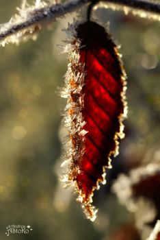 Frozen edge ~ autumn Leaves by AStoKo