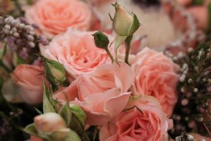 Pink roses by RiaSal