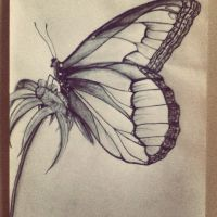 Butterfly. by SammyInsanity