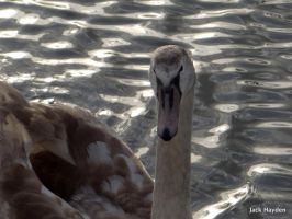 Goose Face by JackHayden