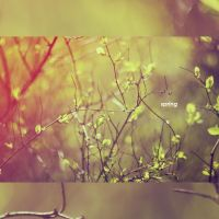 q0118 - in spring by SlevinAaron