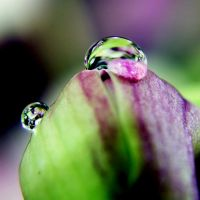 Droplet 8 by josgoh