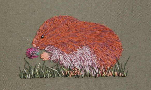 Vole by RuthNorbury