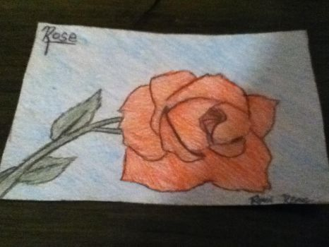 Rose Drawing by ronirene