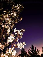 Twilight Plum Blossoms. by theblueofmyoblivion