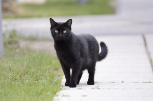 Black Cat 14 by Lakela