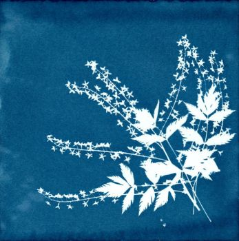 cyanotype blue flower by mouse2cat