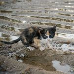 wet kitty by poivre