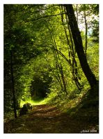 Tunnel forestier by achel