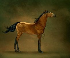 Le Cheval Arabe: Un by howlinghorse