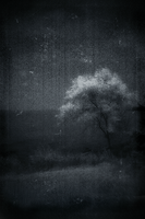 Night Fall by intao