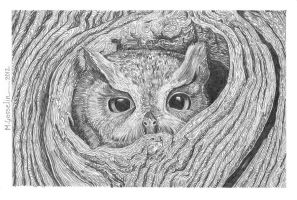 Owl by marcgosselin