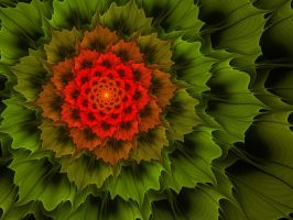 Exotic plant by mahaon
