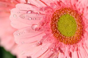 Macro Droplets by redwolf