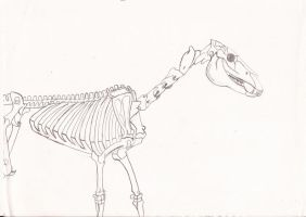 Skeleton Horse by kiinastar