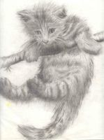 Old Kitty - 2nd Realism by angeliceva042