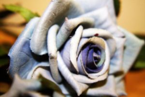 Roses are Blue by MysteryWoman101