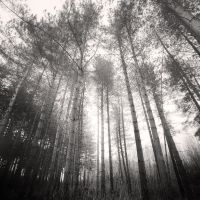 Pine Forest V by Jez92