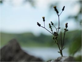 Out of Focus by Idle-Emma