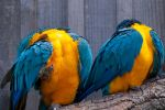 Longleat Parrots by garethjns