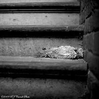 Beauty In Decay by rjcarroll