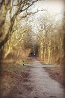 Wich Way To Go by ThePhotoWithHope