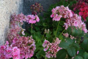 pink and green day by pablour026